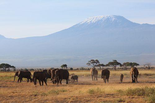 Ambuseli Park - Blick auf Kilimandscharo